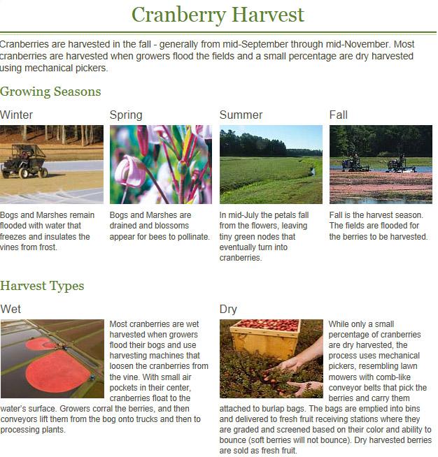 cranberry harvest.jpg